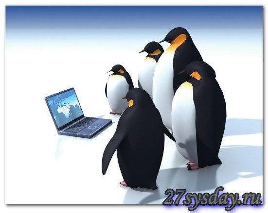 пингвины в тыкают в ноутбук